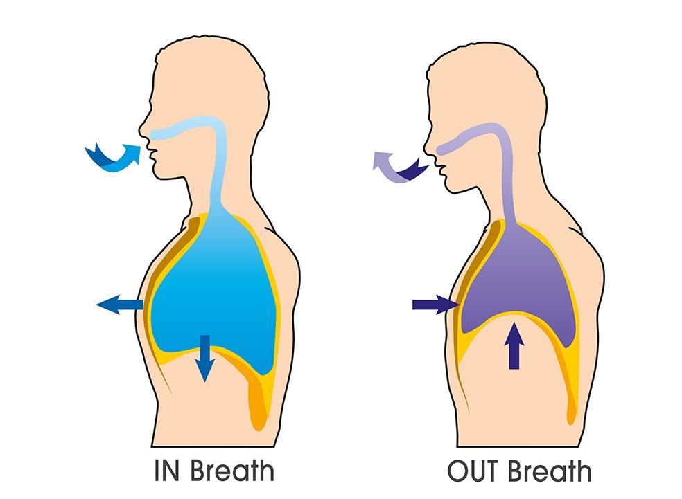 Diaphragm Breathing Tribreath Move Better Breathe Better