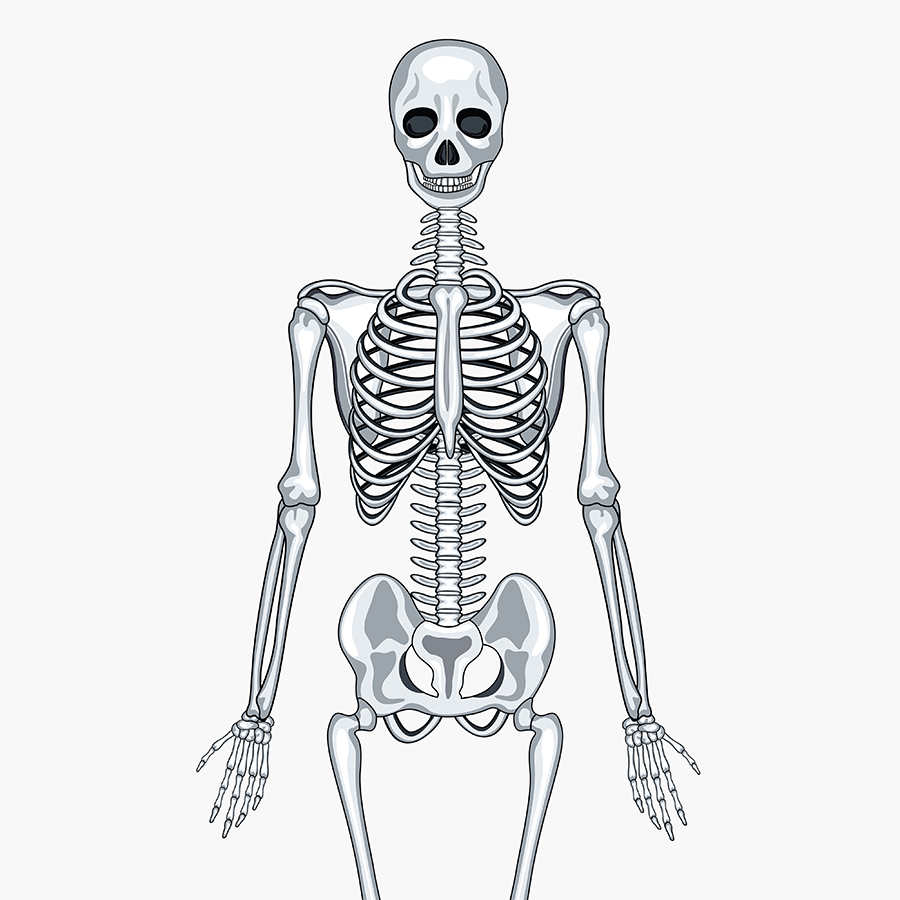 Wall Work Skeleton